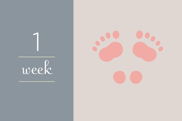 BabyGuide_week_1