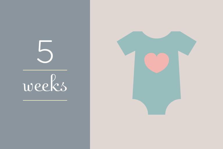 BabyGuide_week_5